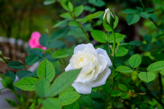 Vườn hoa ở thiền viện Trúc Lâm