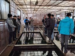 tham-quan-koi-farm-ojiya-2