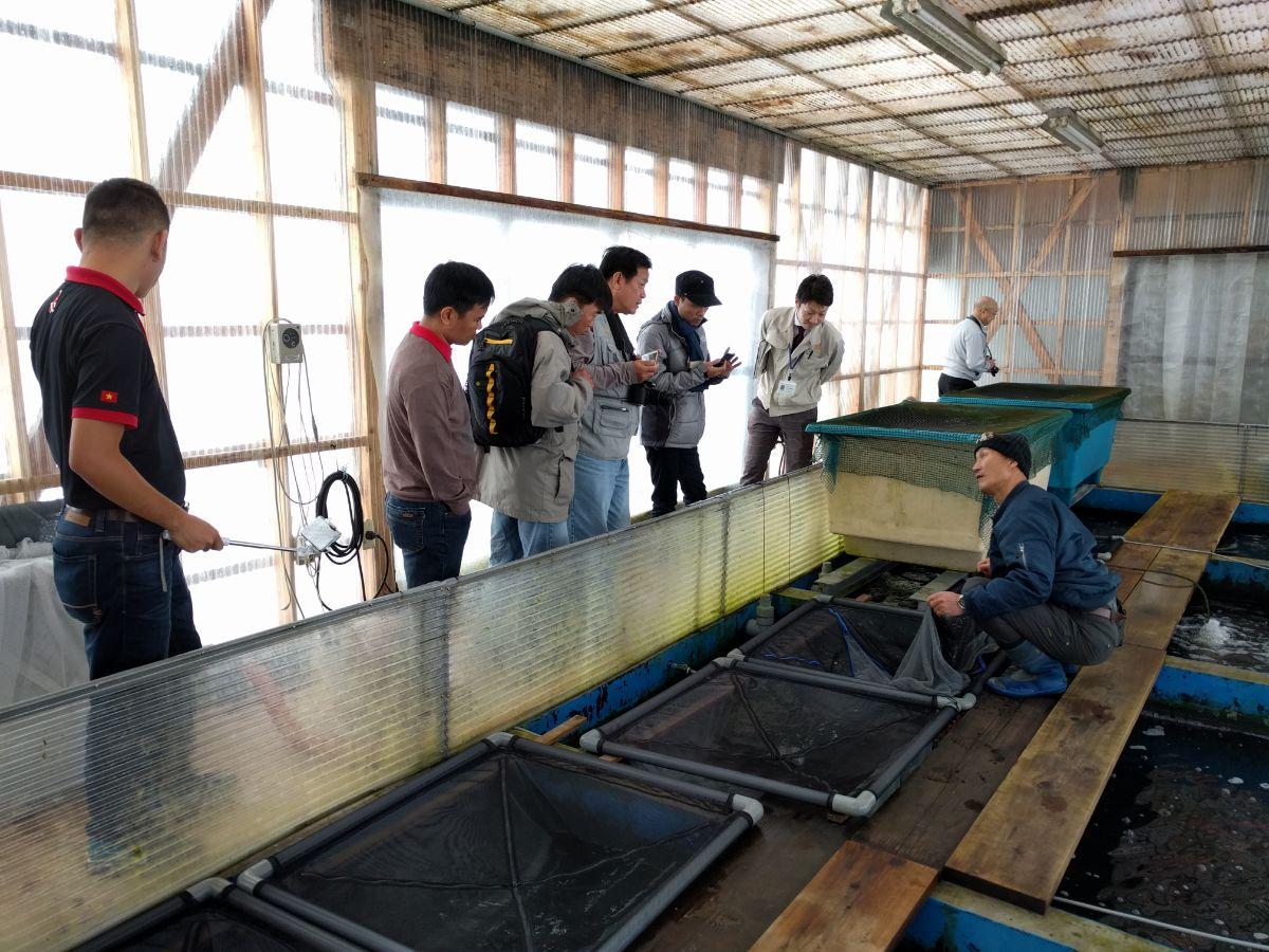 Tham quan trang trại cá Koi