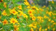 hoa da quy