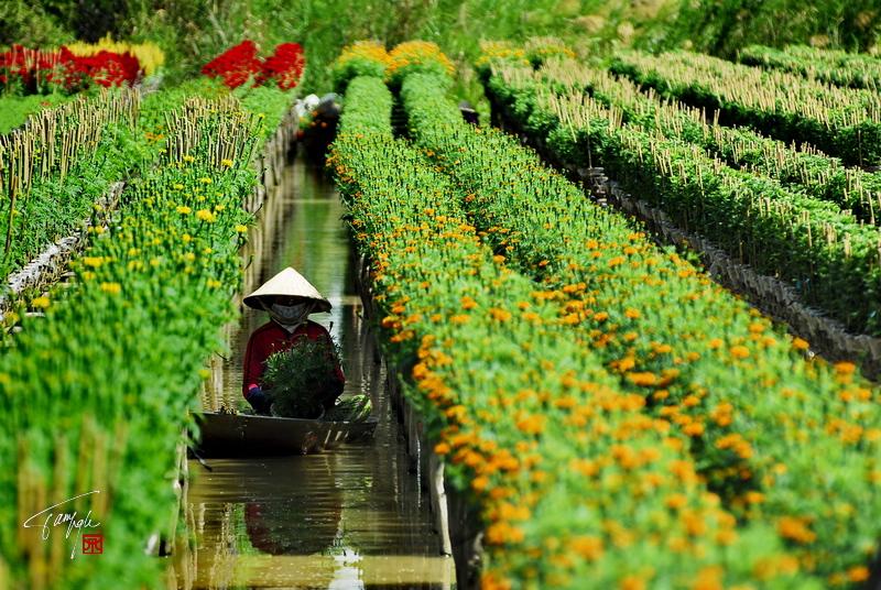 Làng hoa Sa Đéc - một điểm đến trong tour du lịch Đồng Tháp 1 ngày