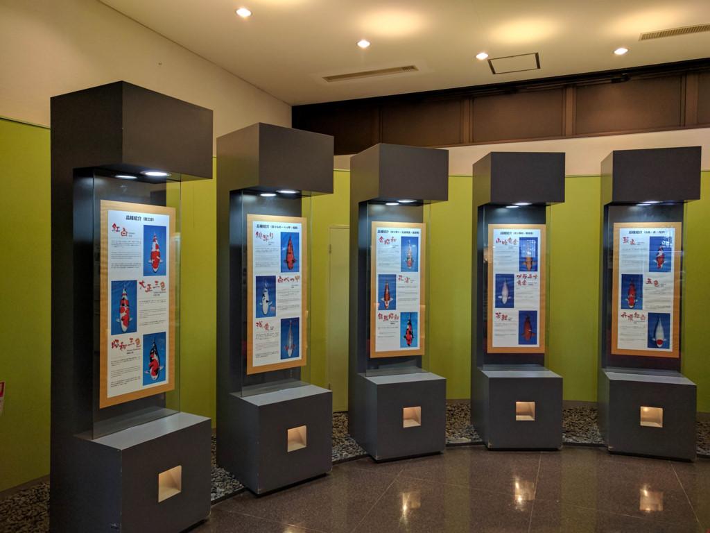 Tại Nishikigoi no sato du khách sẽ được tìm hiểu về lịch sử cá koi, tìm hiểu về các loài cá koi, đặc biệt là được trải nghiệm cho cá ăn.