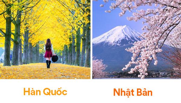 Các trải nghiệm ở Hàn Quốc và Nhật Bản
