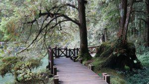 Lối đi cho du khách ở Alishan