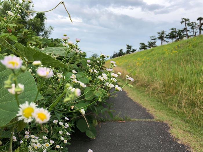 Con đường đầy hoa ở Hakone